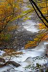 USA, North Carolina, Great Smoky Mountains National Park,
