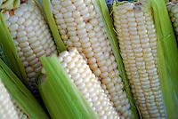White Sweet Corn, Farm-fresh produce fresh, savory, edible