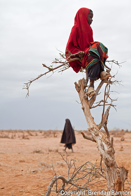 A Somali refugee girl sits perched on a tree in Ifo camp.