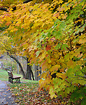 A Walking Path And Park Bench Framed By The Brilliant Colors Of A Rainy Autumn Day, Sharon Woods, Southwestern Ohio, USA