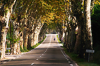 A tree lined country road allee with plane trees platanes. A man on bicycle. Saint Remy Rémy de Provence, Bouches du Rhone, France, Europe