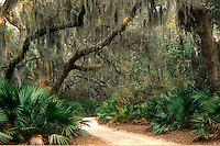 AJ1543, Cumberland Island, Georgia, Spanish moss hangs from live oak trees and palmettos along a trail on Cumberland Island National Seashore, Georgia.
