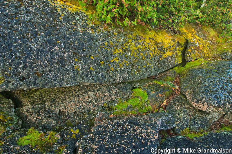 Moss on limestone rock. Burnt Point. Bruce Peninsula.<br />Bruce Peninsula National Park<br />Ontario<br />Canada