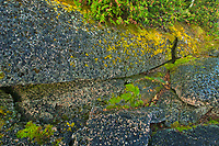Moss on limestone rock. Burnt Point. Bruce Peninsula.<br />