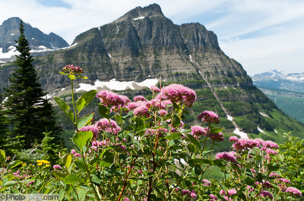 Hike The Garden Wall Trail From Logan Pass Through Fields Of Flowers