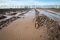 Field flooded after lifting potatoes and heavy rainfall - November, Lincolnshire