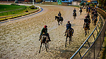 November 1, 2018: Horse walk onto the track for morning works in preparation for the Breeders' Cup races at Churchill Downs on November 1, 2018 in Louisville, Kentucky. Michael McInally/Eclipse Sportswire/CSM