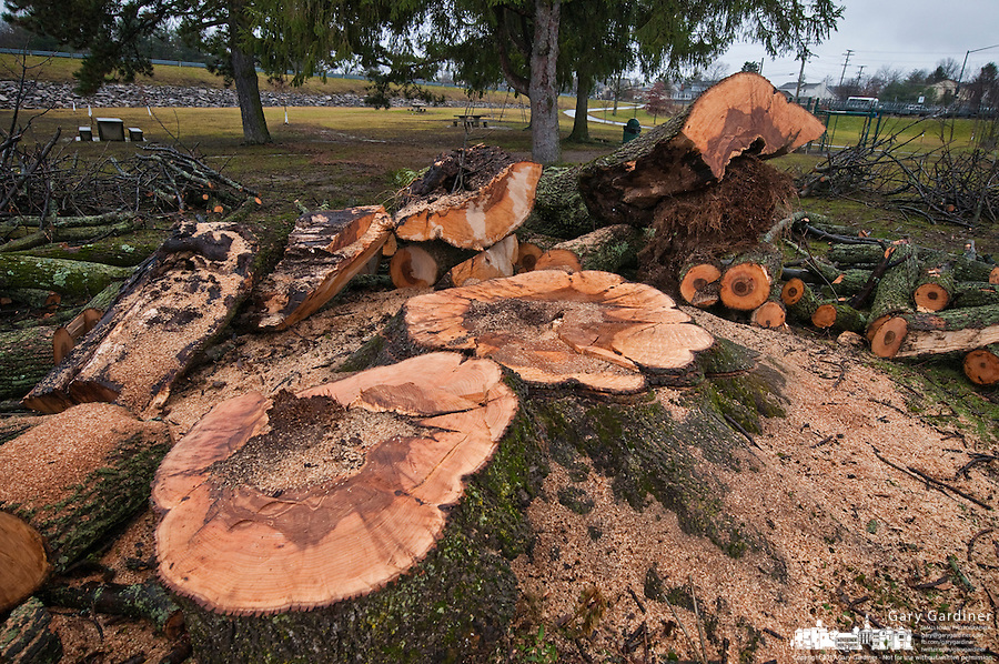 hoover-tree-removal-2011-12-27-00025 jpg | SmallTown Stock