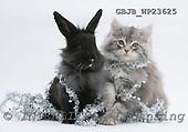 Kim, CHRISTMAS ANIMALS, photos, GBJBWP23625,#XA# stickers