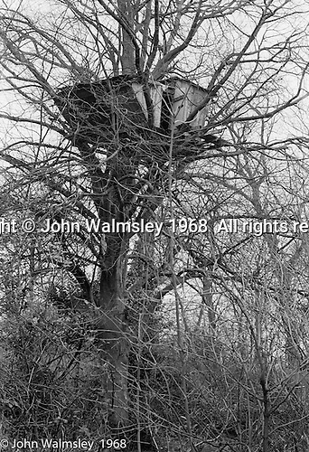 Tree house in the grounds, Summerhill school, Leiston, Suffolk, UK. 1968.