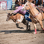 A cowboy jumps at a running bullock, from a galloping horse