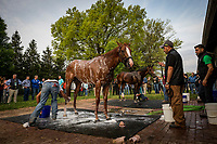 LOUISVILLE, KY - MAY 02: Good Magic and Bolt d'Oro get a bath at Churchill Downs on May 2, 2018 in Louisville, Kentucky. (Photo by Alex Evers/Eclipse Sportswire/Getty Images)