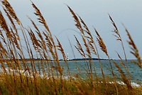 Seagrass waves across the water from Cape Lookout lighthouse in North Carolina's Outer Banks.