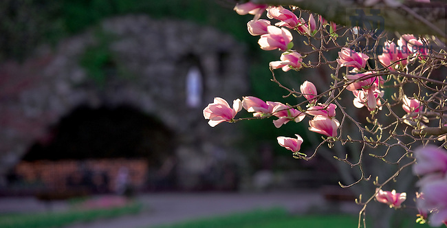 Grotto in Spring, 2010..Photo by Matt Cashore/University of Notre Dame