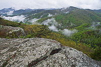 Blue Ridge Parkway, VA<br /> Fog and mist linger in the forested folds of the Tye river valley early spring, from Twenty Minute Cliff, early spring