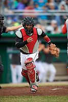 Batavia Muckdogs catcher Pablo Garcia (4) tracks down a loose ball during a game against the Williamsport Crosscutters on June 22, 2018 at Dwyer Stadium in Batavia, New York.  Williamsport defeated Batavia 9-7.  (Mike Janes/Four Seam Images)