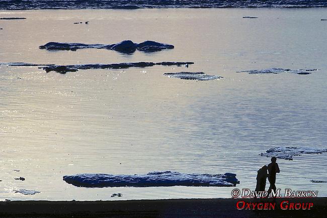 Couple On Beach & Arctic Ocean