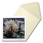 Cycads<br />