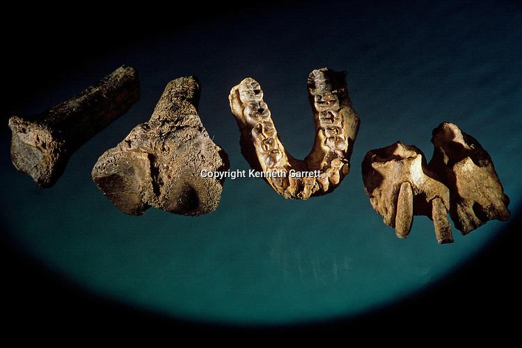 bone fragments, Allia Bay stie, Turkana, Africa; Tibia from Australopithecus anamensis 4.1 million years old, KNM-KP29285