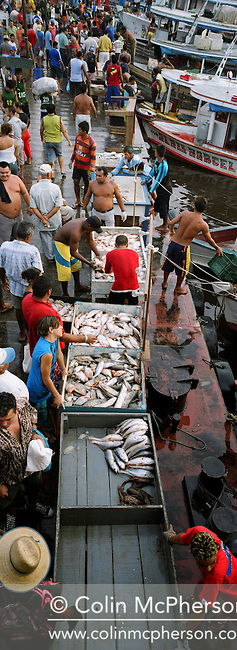 Fishermen on the quayside at Manaus fish market selling their catches from the Amazon and Rio Negro rivers to merchants. 2005 saw the worst drought in the region for 60 years which affected fish sizes and catches. Declining catches were also blamed on the loss of river habitats due to deforestation of the Amazonian rainforest.