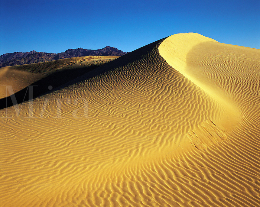 Tall sand-dune in early morning light, Death Valley sands, California, US