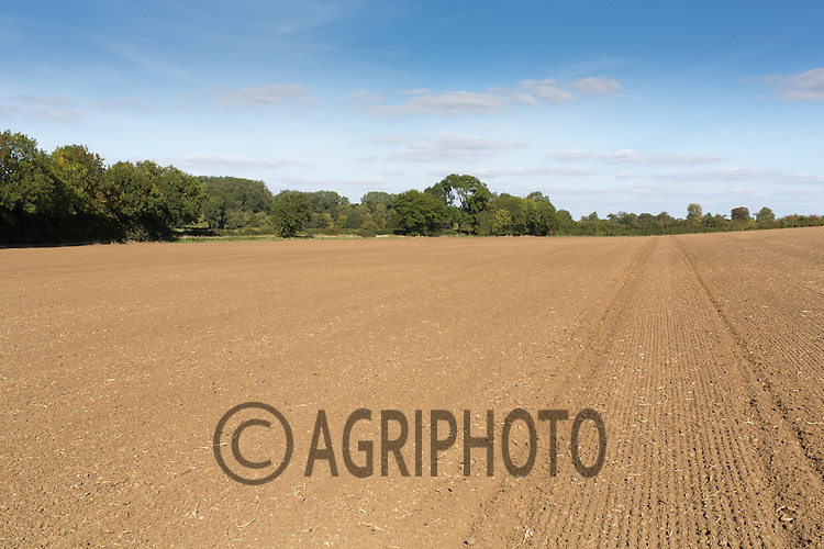 Field of Winter wheat having been rolled <br /> Picture Tim Scrivener 07850 303986<br /> tim@agriphoto.com<br /> &hellip;.covering agriculture in the UK&hellip;.