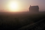 farm buidlings, early morning; mist;
