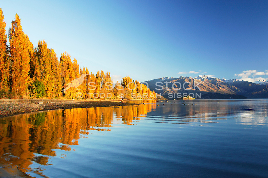 Premium New Zealand Landscape Image | Autumn trees reflected in Lake Wanaka, Southern Lakes, New Zealand<br /> <br /> SORRY - NO NEW ZEALAND SOUVENIR OR POSTCARD LICENCING PERMITTED
