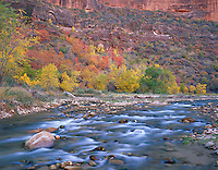 Zion National Park, UT<br /> The Virgin River flows beneath a hillside of fall colored trees near Big Bend in Zion Canyon