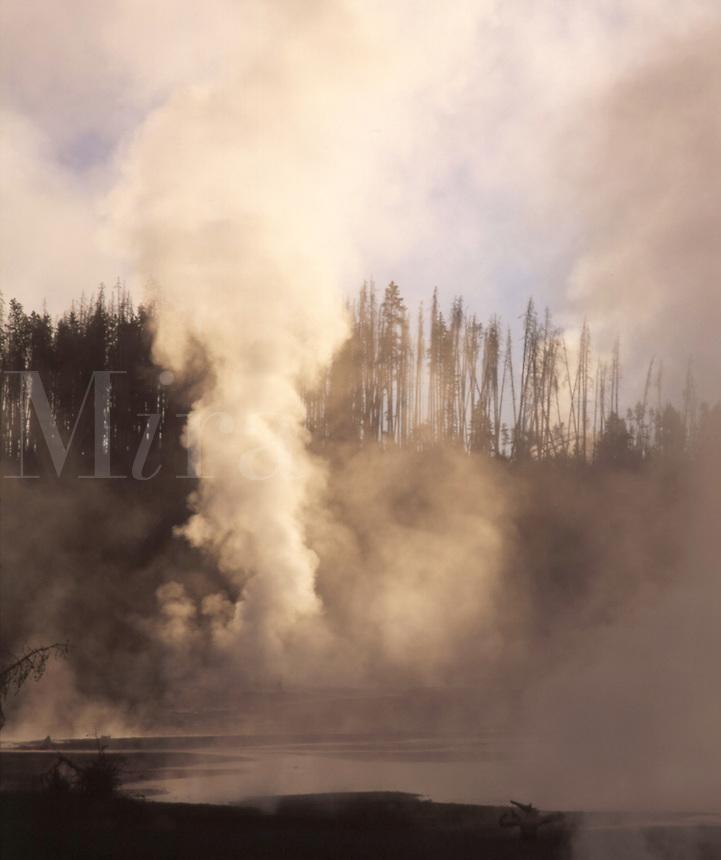 WY64C47 Norris Geyser Basin, Yellowstone N.P., WY. Yellowstone National Park, Wyoming.