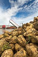 British Sugar Bury St Edmunds factory<br /> Picture Tim Scrivener 07850 303986
