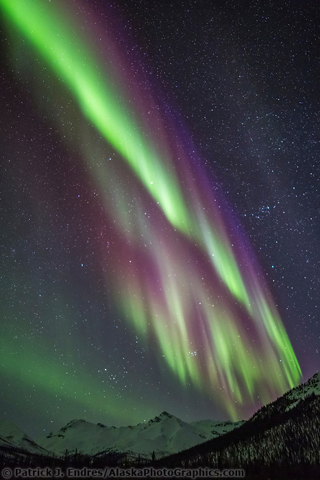 Colorful northern lights over spruce trees in Alaska's Arctic.