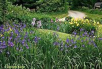 HB05-022x  English Cottage Garden - yellow day lilies, bearded iris - Hemerocallis spp, Iris spp.