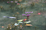 """A beautiful clear pond has been nicknamed """"Monet's Pond"""" in Seki City, Gifu Prefecture, Japan. Located on the approach to Nemichi Shrine, the pond has been attracting many visitors due to its close resemblance to the pond from French Impressionist painter Claude Monet's famous """"Water Lilies"""" paintings. The artificial pond is fed by spring water and very clear. It was created in 1980 and locals planted water lilies some 16 years ago and also released carp in the pond. A local tourism association set up a temporary tourist information center nearby to assist the many visitors it is attracting. A number of Monet's """"Water Lilies"""" paintings are currently on display at the Tokyo Metropolitan Art Museum. (Photo by Mika Asai/AFLO)"""