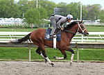 Maximum Security with exercise rider Edelberto Rivas, gallops a mile on the track at Monmouth Park in Oceanport, New Jersey on Thursday morning May 16, 2019. Maximum Security returned to the track after a week of easy walking.  Photo By Bill Denver/EQUI-PHOTO