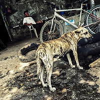 A street dog begs for food in front of a car mechanic workshop in the outskirts of Santiago Nonualco, El Salvador, 6 April 2018.