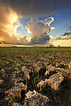 Exposed limestone, Everglades National Park, Florida