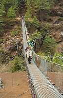 Nepal Himalayas Dzo yaks walking accross suspension bridge at Larjha Doban Solukhumbu remote cow yak Mt Everest