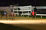 no. 6 Looter Bob winner of the Frightful Flash Kennels Sweepstake Final at the Kingdom Greyhounds Stadium on Friday