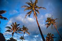 Palm trees at sunrise at Radisson Kaua'i Beach Resort, island of Kaua'i, Hawaii USA