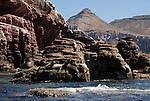 California sea lions at Los Islotes