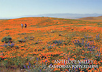 FB 136  Anetlope Valley California Poppy Reserve,  4x6 postcard