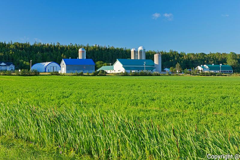 Farms and crop<br />Cacoona<br />Quebec<br />Canada