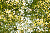 Defocused (Soft Focus) View of Trees and Early Fall Foliage in Central Park<br />