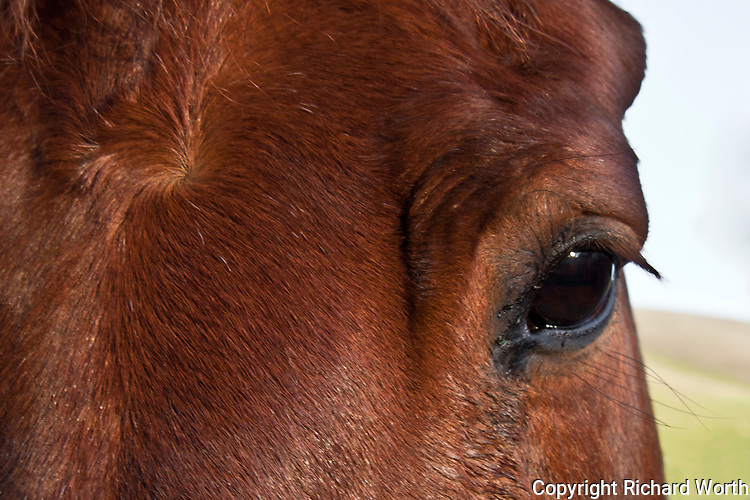 Close-up of a horse's eye. Hollywood is a retired show horse who immediately recognized the camera and was a perfect model.