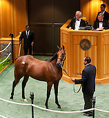 HIP 114, by Bernardini out of Easter bunnette, $1.2 million.