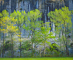 Buffalo National River, AR:  Spring morning light on trees across from Roark Bluff