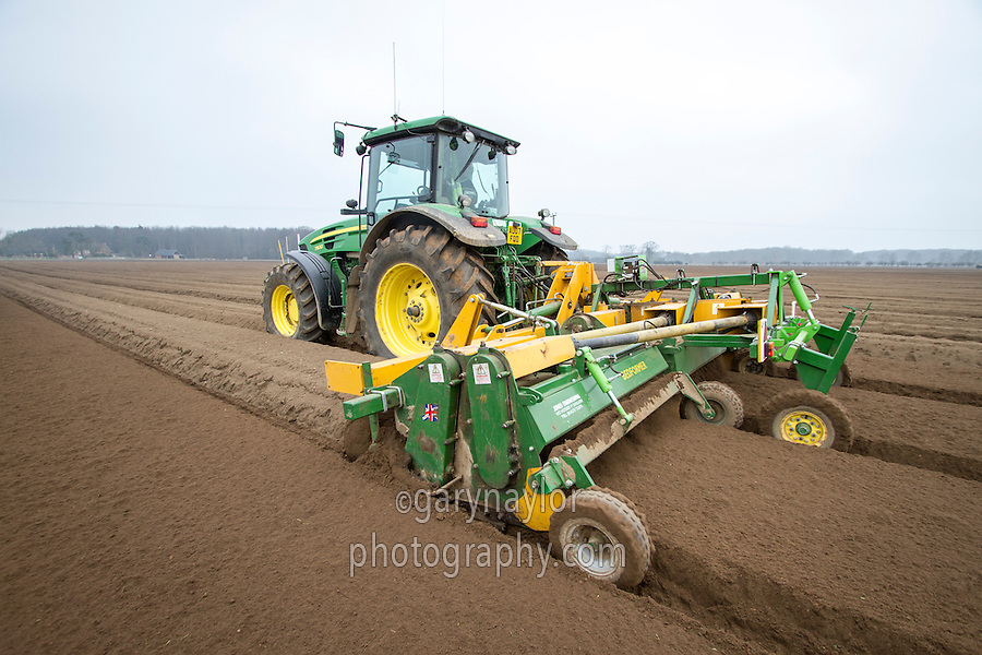 Rotary cultivating carrot beds with triple bed tiller - March; Norfolk