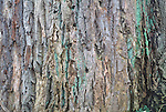 Tree bark, Hampstead Heath London UK