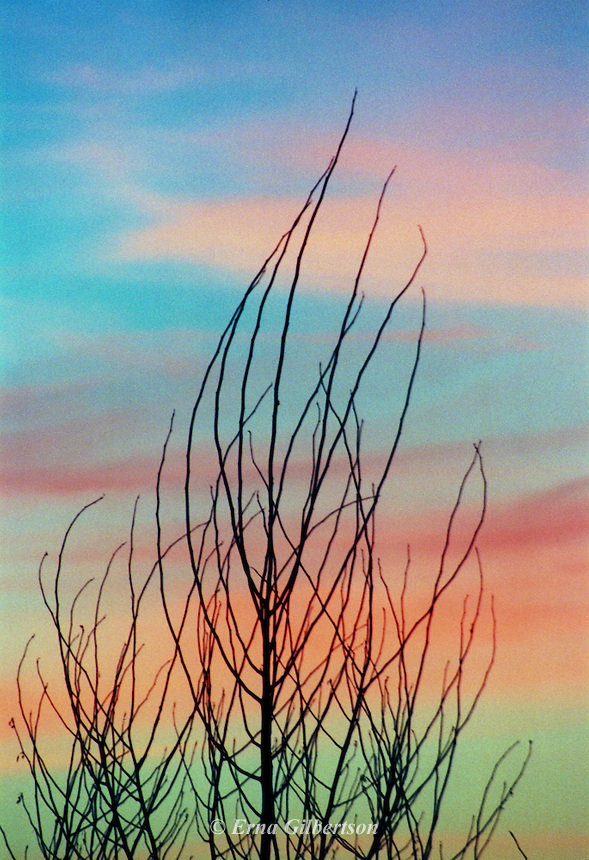 Layers of color painted the sky behind a dormant tree